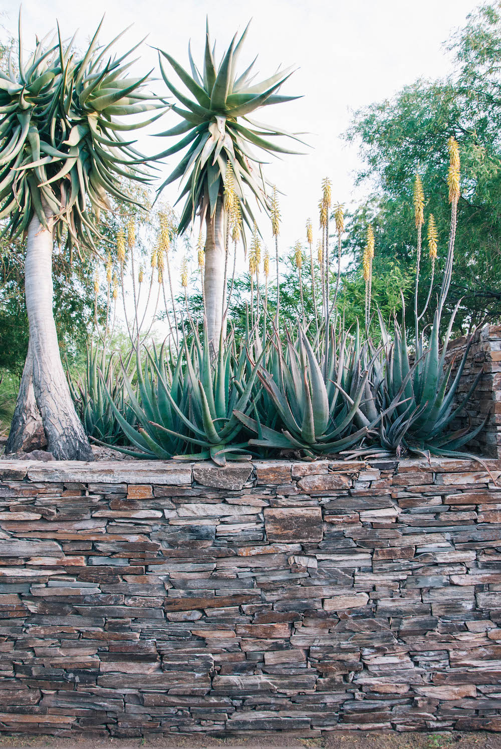 Tequila Tasting in Phoenix, Arizona - Agave on the Rocks