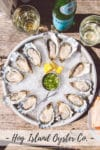 Tray of Hog Island Oyster Co. Kumamotos arranged in a circle